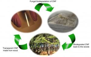 BiodegradableChip